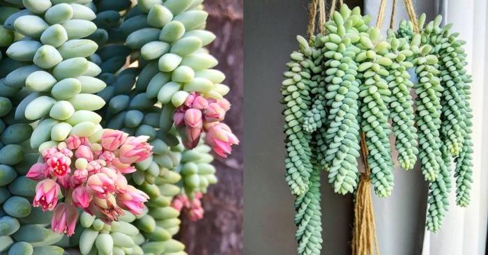 Làm sao để hoa đá đột biến đổi màu; đẹp nhất thế giới; Những loại; khó trồng; Các loại; giống mới;