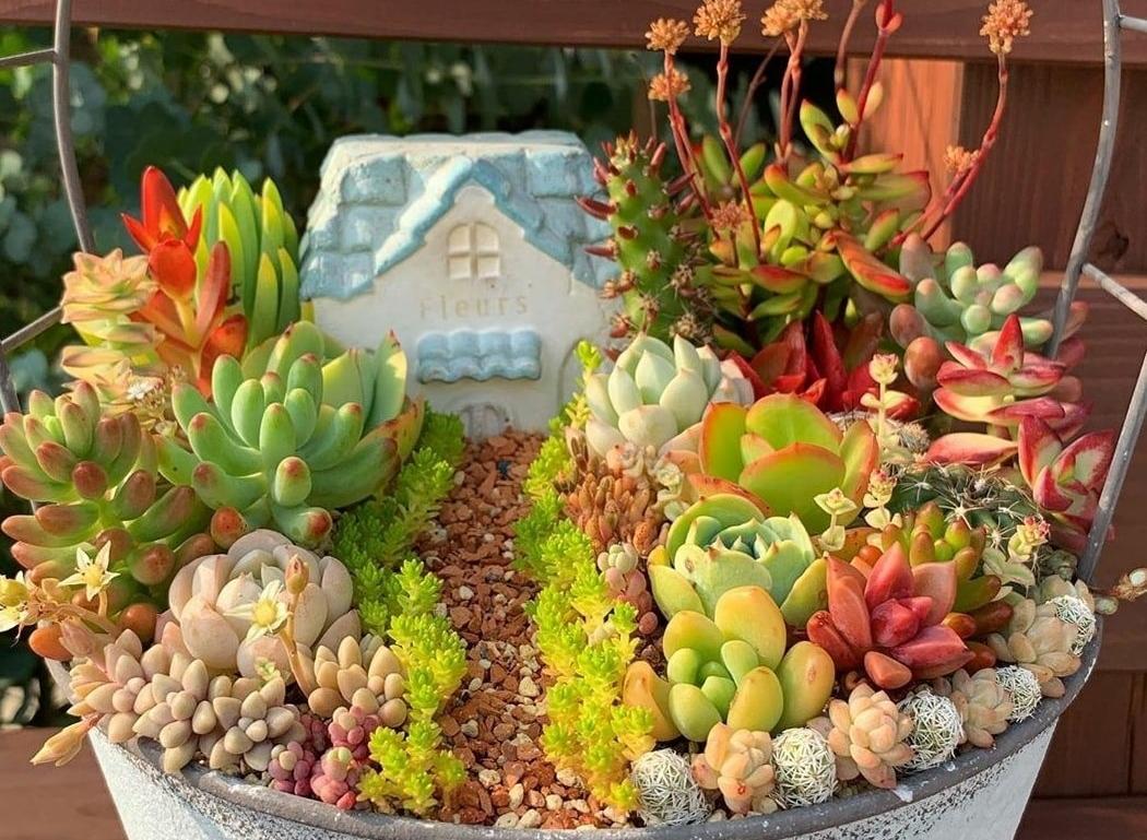 Chơi Thiết kế vườn; Các loại hiếm; liên đài ruby trắng; hoa đá xanh; giá bao nhiêu; sống được bao lâu