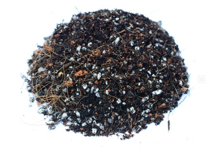 Trồng sen đá bằng đất thường được không; Mua đất trồng sen đá tphcm; Trồng sen đá bằng đất Akadama; Cách trộn xơ dừa trồng sen đá.