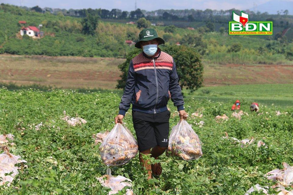 Anh Kiều quyết định gửi tặng toàn bộ vườn củ cải rộng 2,5 ha tới người dân TP. HCM