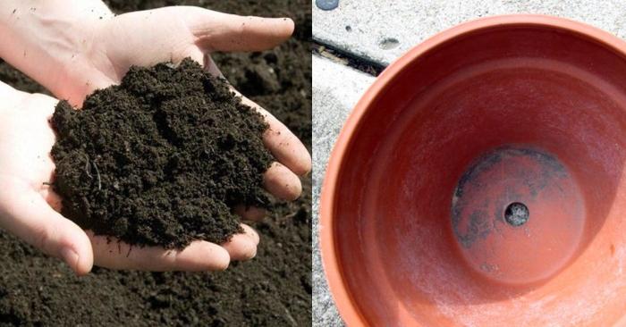 Cách trồng nha đam bằng lá đơn giản dễ thực hiện, bằng bẹ, hạt giống, cây, hướng dẫn, dất trồng.
