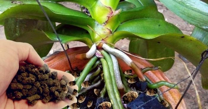 cây hoa lan, sử dụng, ánh sáng, quà tặng, phát triển, màu sắc, may mắn, lựa chọn, cửa hàng, vườn.