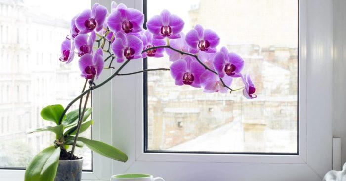 Cách trồng - chăm sóc hoa lan hồ điệp ra hoa rực rỡ, tho ve hoa phong lan, đang, khi, kinh nghiệm.