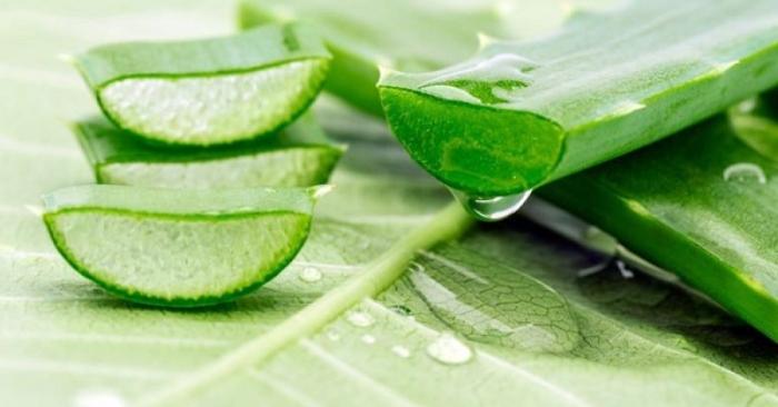 Nước nha đam để được bao lâu? Phương pháp bảo quản nha đam đúng chuẩn; nám tàn nhang; da mặt; da.